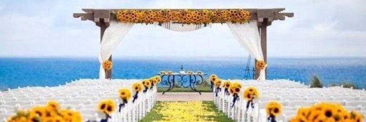 Słoneczniki – trochę słońca w weselnym menu